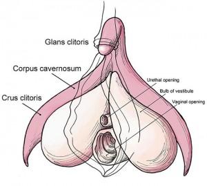 16_06_2014_articulo_Clitoris_pequeno_asociado_a_anorgasmia_F2